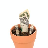 Clay flower pot with cash growing