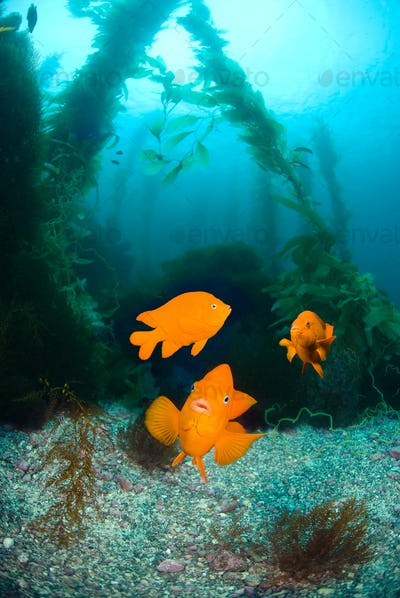 Orange fish on ocean reef