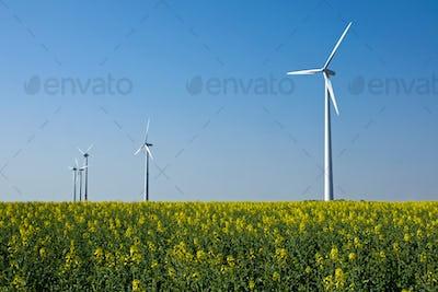 Windwheels in a field of rapeseed