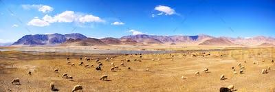 Tibetan landscape panorama