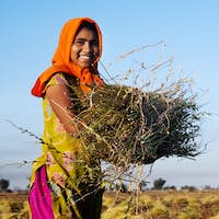 Indian Girl Working on the Farm