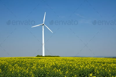 Rapeseed and windwheel