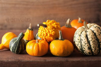 decorative mini pumpkins on wooden background