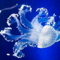 Underwater paradise.  Swimming Jellyfish On Blue Background