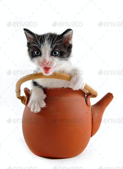 kitten in teapot
