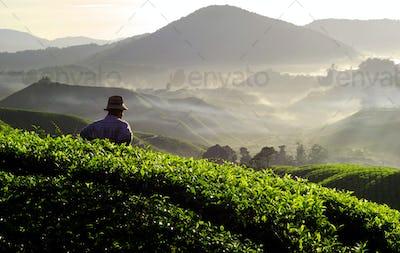 Farmer at Tea Plantation