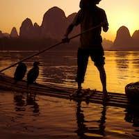 Chinese Man Cormorant Fishing on River