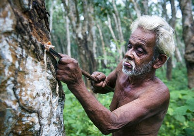 Man Tapping Rubber Tree