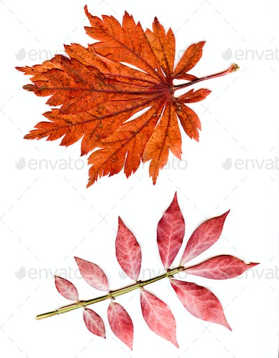 Colorful set of autumn leaves. collection beautiful colorful aut
