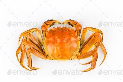 delicious crab