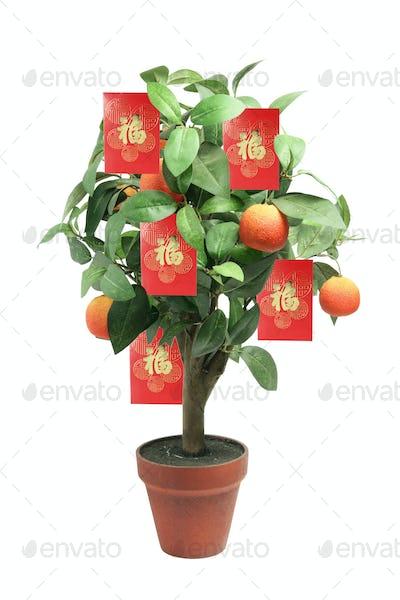 Tangerine Plant
