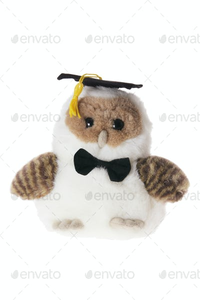 Graduating Owl