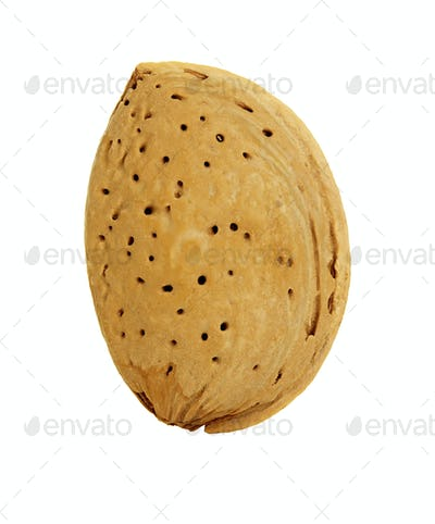 Almond nut in shell isolated on a white background.