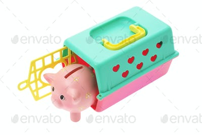 Piggybank in Plastic Box