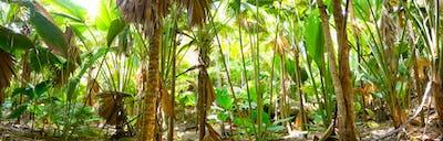 Palm jungle panorama