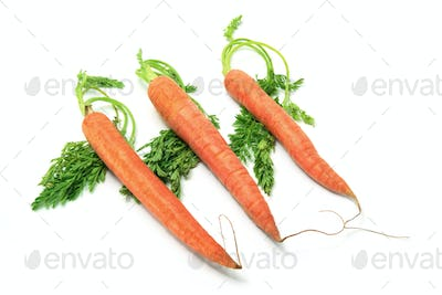 Carrots with Leaves on White Background