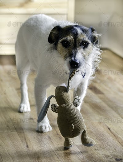 Dog Carrying Toy