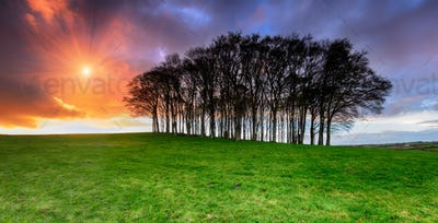 Sunset over Fairy Woods