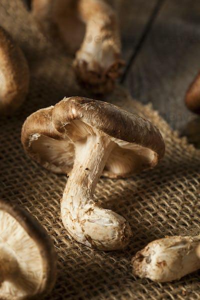 Raw Organic Shitaki Mushrooms