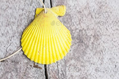 Yellow shell