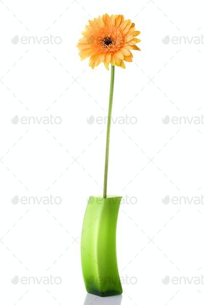 Orange daisy-gerbera in green glass vase isolated on white
