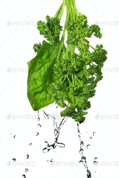 water drops on green spinach and parsley isolated on white