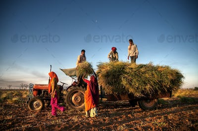 India Family Faeming Harvesting Crops
