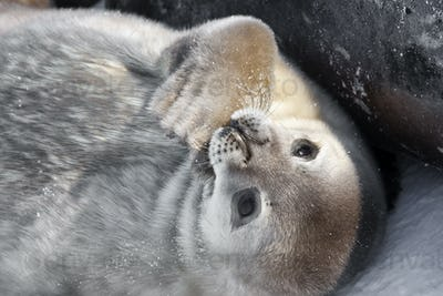Seal rests