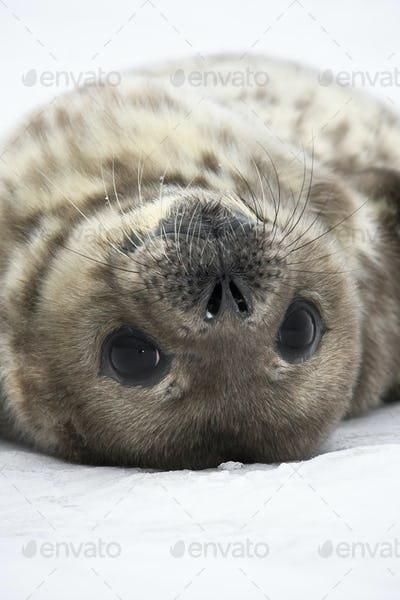 Seal rests