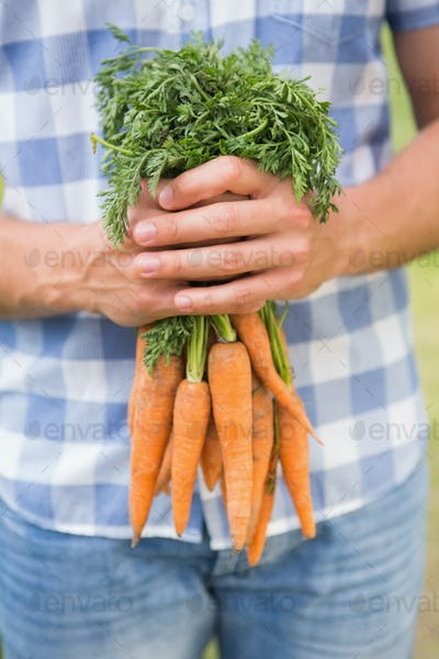 Farmer holding bunch of organic carrots on a sunny day