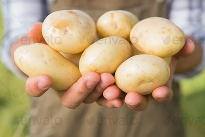 Farmer showing his organic potatoes on a sunny day