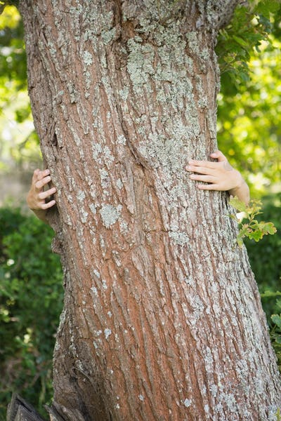 Woman hugging a tree on a sunny day