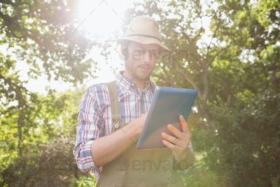Farmer using his tablet pc on a sunny day