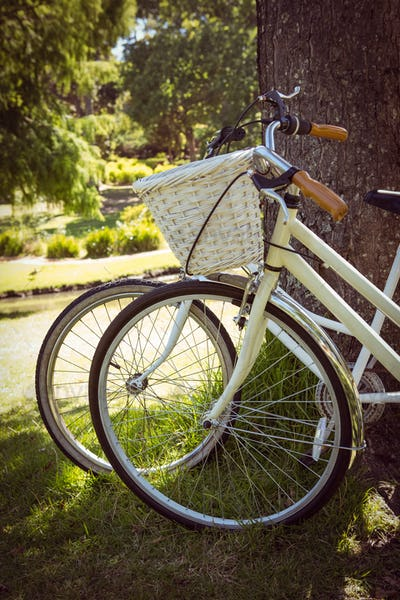 Bicycles leaning against tree in park on a sunny day