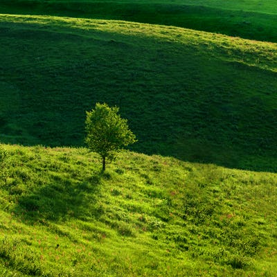 Green meadow and tree