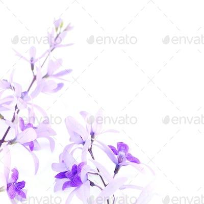 Sandpaper Vine