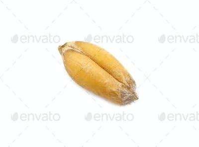 wheat seed macro