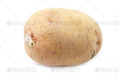 potato is isolated