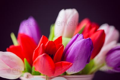 Bunch of tulips on black background