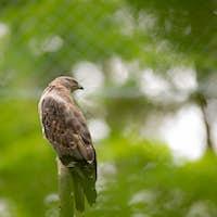 Majestic hawk perching on a dead tree