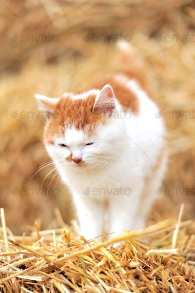 Cat on a straw