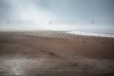 sea gull flying across a golden sandy beach during low tide