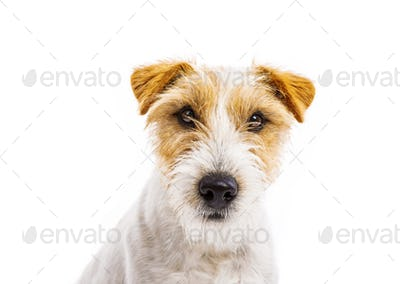 Young dog isolated