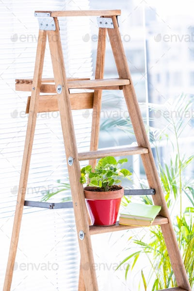 Green plant on wooden ladder in office
