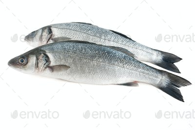 two sea bass isolated