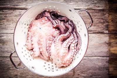 two fresh raw octopus in white colander