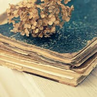 Dried hortensia on the vintage book