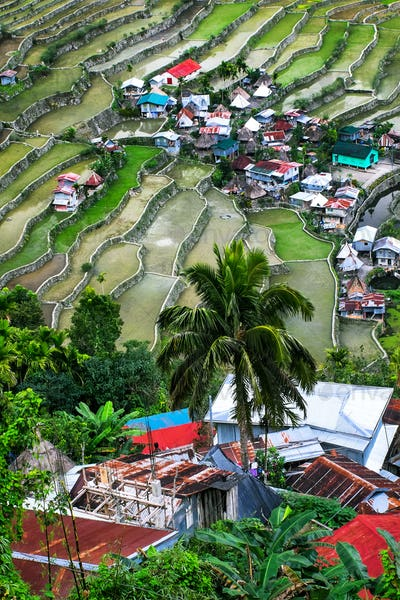 Village houses near rice terraces fields. Banaue, Philippines