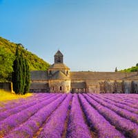 Abbey of Senanque blooming lavender flowers on sunset. Gordes, L