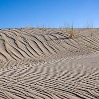 Sand dune with same marram grass